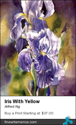 Iris With Yellow by Alfred Ng - Painting - Watercolor On Paper