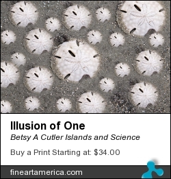 Illusion Of One by Betsy A Cutler East Coast Barrier Islands - Digital Art - Fine Art Photography And Digital Art