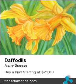 Daffodils by Harry Speese - Painting - Pastel