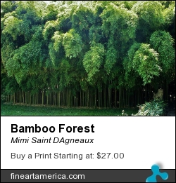 Bamboo Forest by Mimi Saint DAgneaux - Painting - Photograph