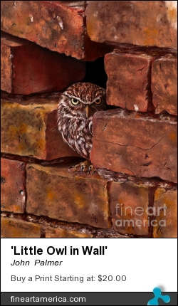 'little Owl In Wall' by John  Palmer - Painting - Pastel