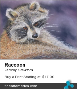 Raccoon by Tammy Crawford - Painting - Pastel On Sandpaper