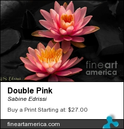 Double Pink by Sabine Edrissi - Photograph - Photography
