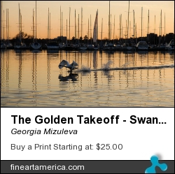 The Golden Takeoff - Swan Sunset And Yachts At A Marina In Toronto Canada by Georgia Mizuleva - Photograph - Fine Art Photograph