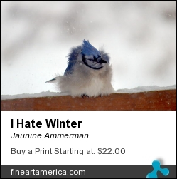 I Hate Winter by Jaunine Ammerman - Photograph - Photographs