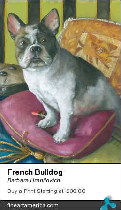 French Bulldog by Barbara Hranilovich - Painting - Gouache On Paper
