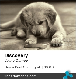 Discovery by Jayne Carney - Photograph - Photography