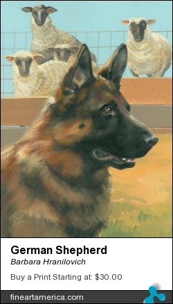 German Shepherd by Barbara Hranilovich - Painting - Gouache On Paper