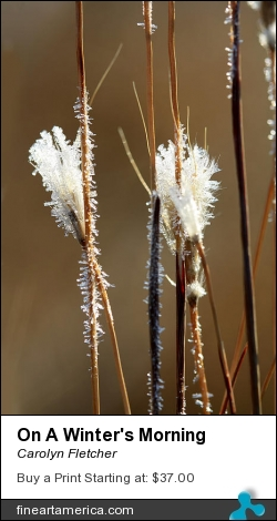 On A Winter's Morning by Carolyn Fletcher - Photograph - Photography
