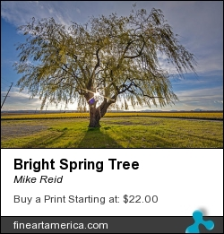 Bright Spring Tree by Mike Reid - Photograph - Photography