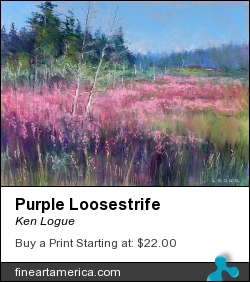 Purple Loosestrife by Ken Logue - Painting - Pastel On Board