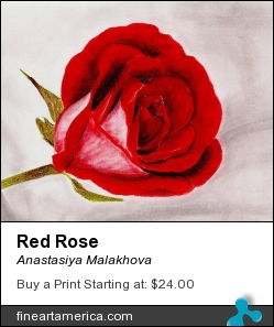Red Rose by Anastasiya Malakhova - pastels and colored pencils on paper