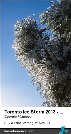 Toronto Ice Storm 2013 - Pine Needle Flowers In The Sky by Georgia Mizuleva - Photograph - Fine Art Photograph