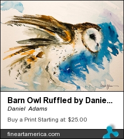 Barn Owl Ruffled By Daniel Adams by Daniel  Adams - Painting - Watercolor