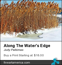 Along The Water's Edge by Judy Palkimas - Photograph - Photography,photograph,digital Art