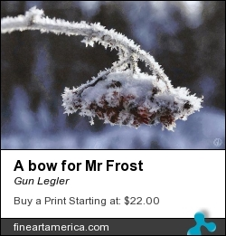 A Bow For Mr Frost by Gun Legler - Digital Art - Photography+painting