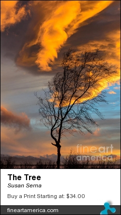 The Tree by Susan Serna - Photograph - Digital