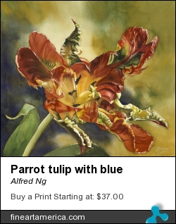 Parrot Tulip With Blue by Alfred Ng - Painting - Watercolor On Paper