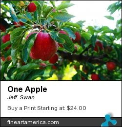 One Apple by Jeff  Swan - Photograph - Photography