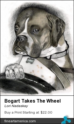 Bogart Takes The Wheel by Lori Nadaskay - Drawing - Graphite & Tone Markers