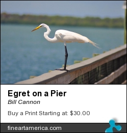 Egret On A Pier by Bill Cannon - Photograph - Photo