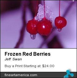 Frozen Red Berries by Jeff  Swan - Photograph - Photography