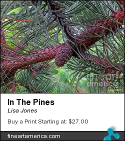 In The Pines by Lisa Jones - Photograph - Photography