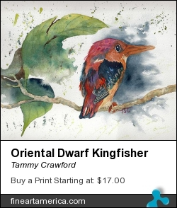 Oriental Dwarf Kingfisher by Tammy Crawford - Painting - Watercolor