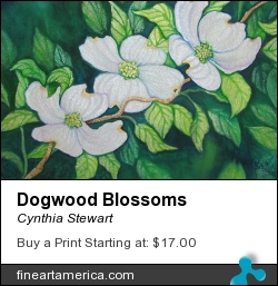 Dogwood Blossoms by Cynthia Stewart - Painting - Watercolor