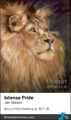Intense Pride by Jan Gibson - Painting - Pastel