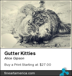 Gutter Kitties by Alice Gipson - Photograph - Photograph