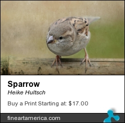 Sparrow by Heike Hultsch - Mixed Media - Fotografie