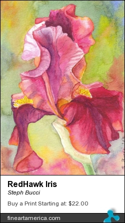 Redhawk Iris by Steph Bucci - Painting - Watercolor