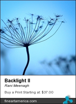 Backlight II by Rani Meenagh - Photograph - Photography
