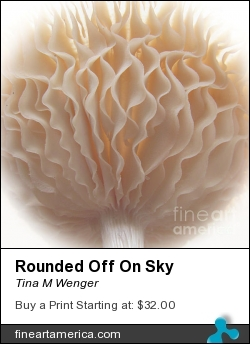 Rounded Off On Sky by Tina M Wenger - Photograph - Prints Of Photographs