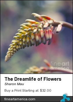 The Dreamlife Of Flowers by Sharon Mau - Photograph - Photography - Fine Art