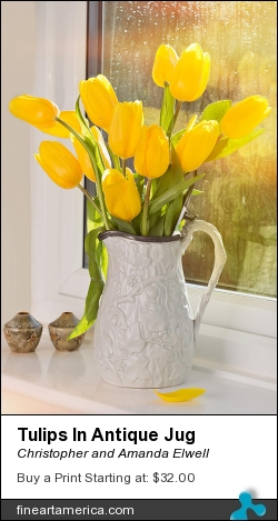Tulips In Antique Jug by Christopher and Amanda Elwell - Photograph - Photograph