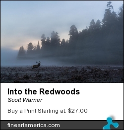 Into The Redwoods by Scott Warner - Photograph - Photo