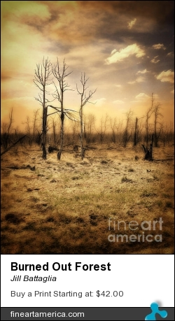 Burned Out Forest by Jill Battaglia - Photograph - Fine Art Photography