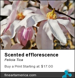 Scented Efflorescence by Felicia Tica - Photograph - Photo