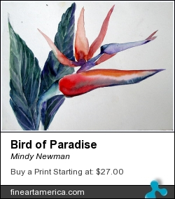 Bird Of Paradise by Mindy Newman - Painting - Watercolor On Archival Paper Or Canvas