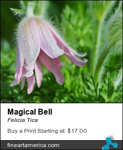 Magical Bell by Felicia Tica - Photograph - Photo