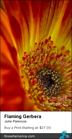 Flaming Gerbera by Julie Palencia - Photograph - Photography/macro