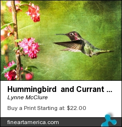 Hummingbird And Currant Bush by Lynne McClure - Photograph - Photography