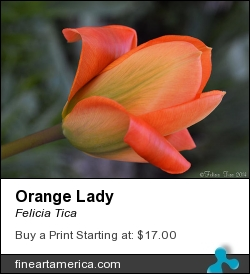 Orange Lady by Felicia Tica - Photograph - Photo
