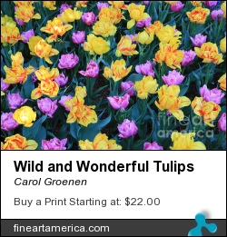 Wild And Wonderful Tulips by Carol Groenen - Photograph - Photography - Digital Art