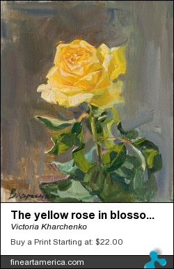 The Yellow Rose In Blossom by Victoria Kharchenko - Painting