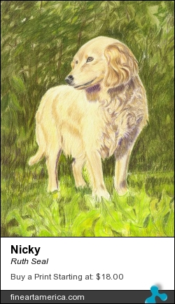 Nicky by Ruth Seal - Painting - Colored Pencil