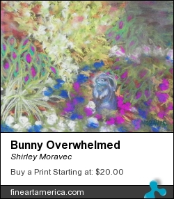 Bunny Overwhelmed by Shirley Moravec - Photograph - Pastel On Paper