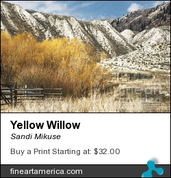 Yellow Willow by Sandi Mikuse - Photograph - Photograph